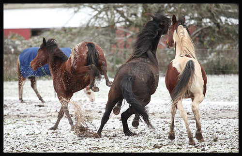 Horsey Tag | by Alise Lamoreaux