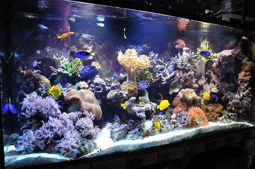 600 gallon reef tank andy long flickr for Exotic fish tanks
