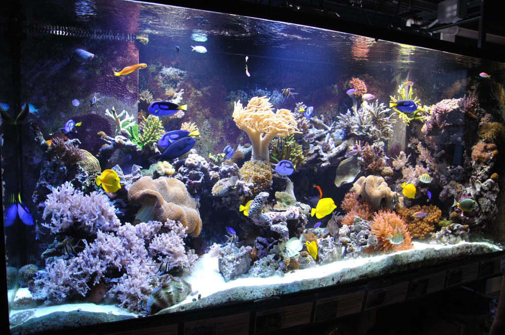 Aquarium Design Jobs
