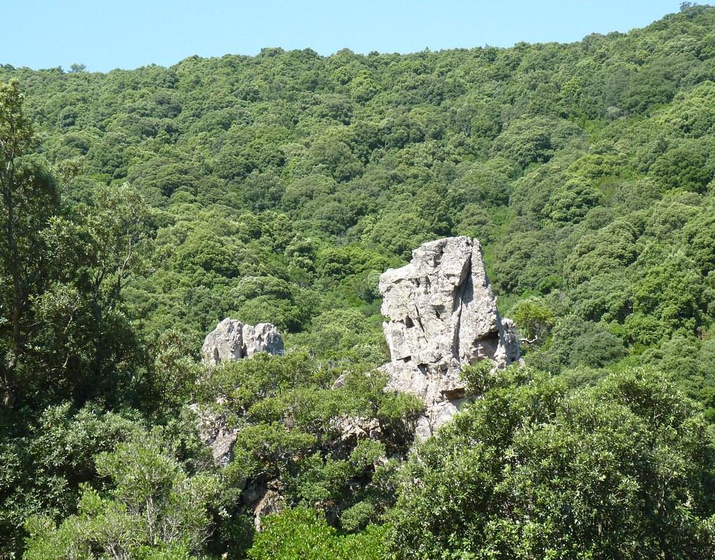 sardegna macchia mediterranea alta nella foresta dei se