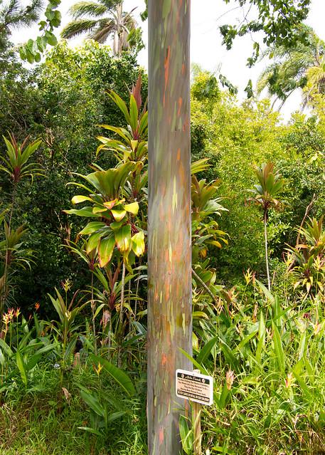 Something is. garden of eden strip