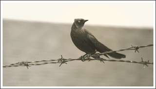 bird on a wire | by wade in da water