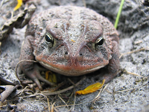 Toad | by Farmer South
