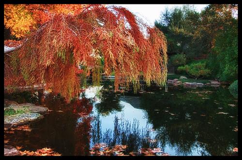 Japanese Gardens Fort Worth Tx Vanja Flickr