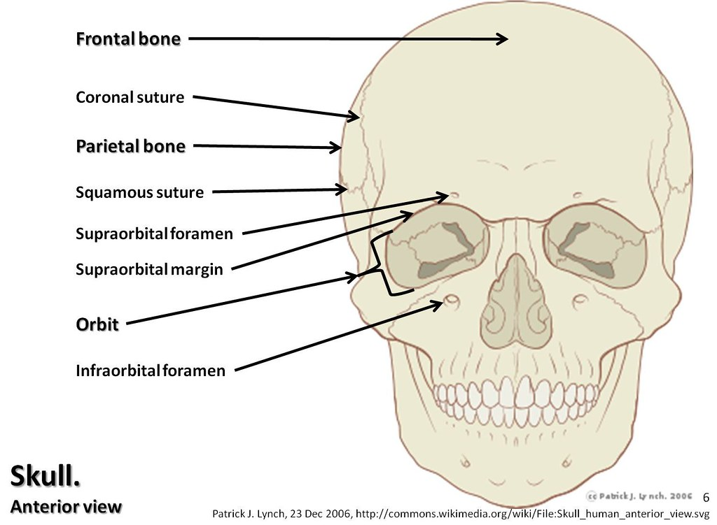 skull diagram anterior view with labels part 1 axial sk. Black Bedroom Furniture Sets. Home Design Ideas