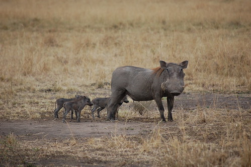 warthog family | by sauerjos