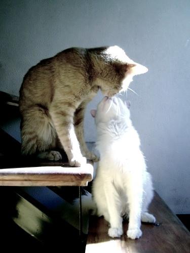 Somos Dos Gatitos Enamorados Payazhaaa Flickr