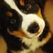 Puppy_Luna