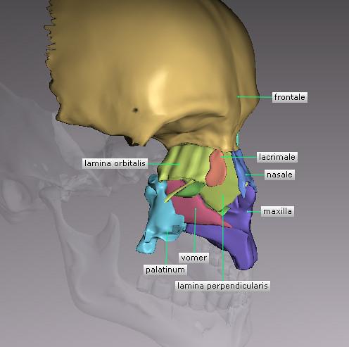 3-D Human Anatomy Software | 3-D Human Anatomy Software | Flickr