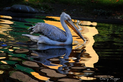 Reflection  in Water Colors | by Gery Singer