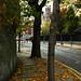 Autumnal Street
