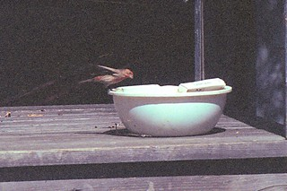 House Finch PH 1995 2 | by THE Holy Hand Grenade!