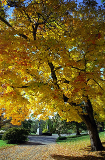 "Cincinnati - Spring Grove Cemetery & Arboretum ""Autumn Delight"" 