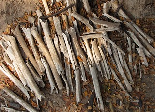 Choeung Ek - Killing Fields - Collection of Human Bones | by FollowOurFootsteps