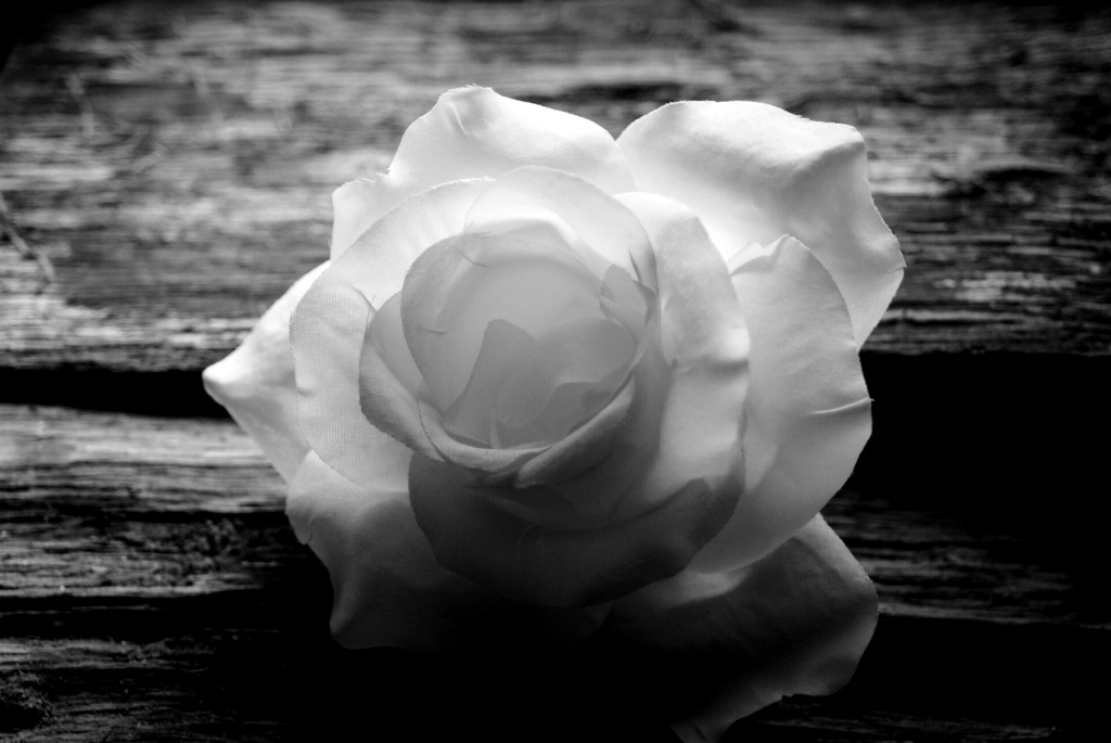 ansel adams rose and drift wood Rose and driftwood, san francisco, california art print by ansel adams find art you love and shop high-quality art prints, photographs, framed artworks and posters at artcom 100% satisfaction guaranteed.