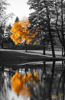 Autumn Reflection | by alanj2007