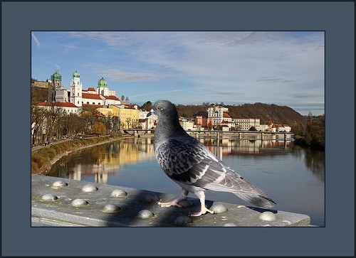 Passau´s Sonnenseite  (the sunside of Passau) | by alfred.hausberger