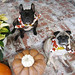 french bulldog and pug on thanksgiving