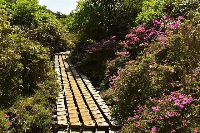 韓国岳・大浪池コース 木道