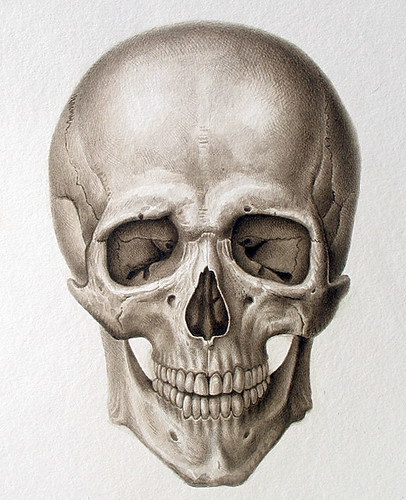 Human Cranium (frontal view) 2008 | Sepia watercolor on ...