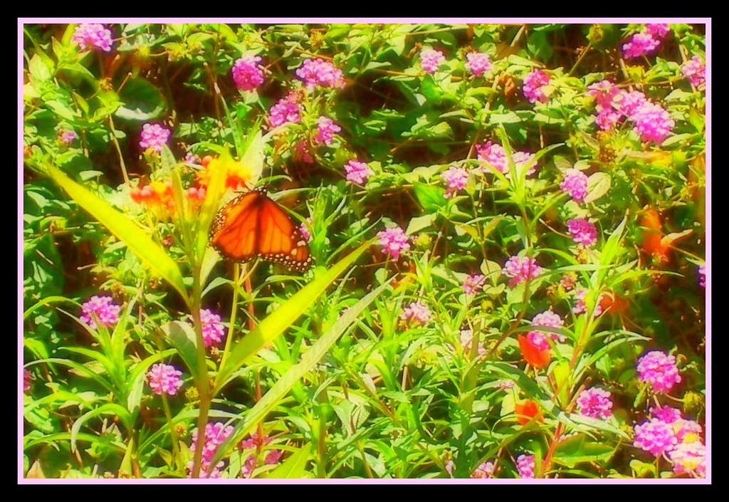 Butterfly Garden Balboa Park San Diego All Rights