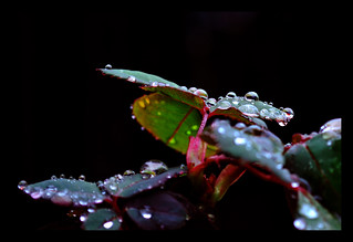 Dew Drops IX | by The Aberrant Eye