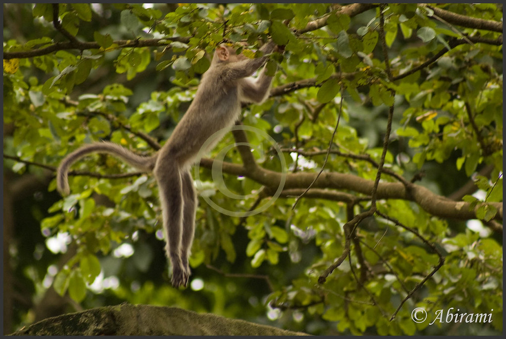 By Trying Often The Monkey Learns To Jump From The Tree
