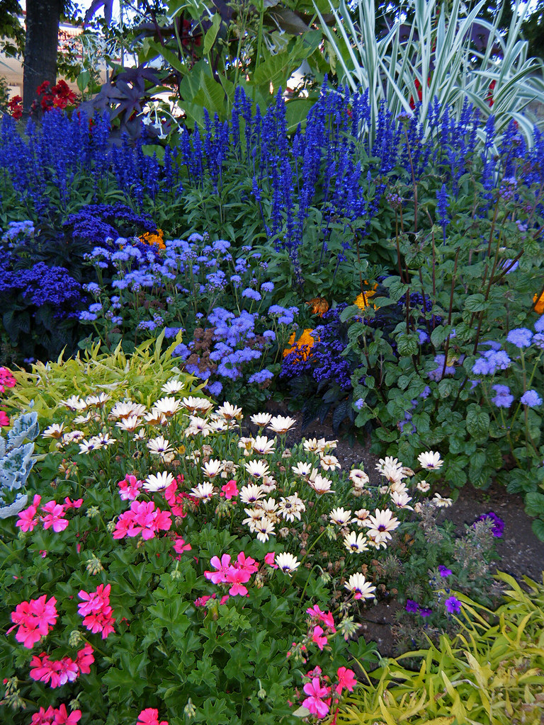 Garden Of Blue White And Pink Flowers The Tall Blue Flowe Flickr