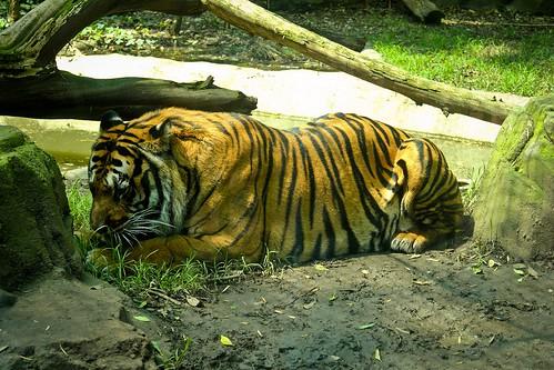 free zoo video