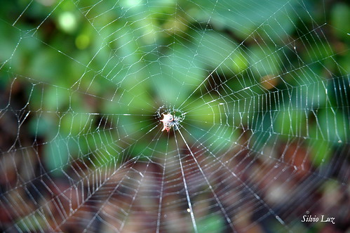 Spider web | by Silvio Luz