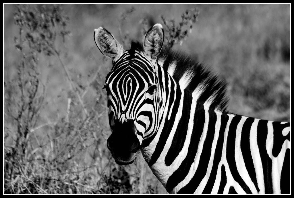 De negro y blanco - 2 7
