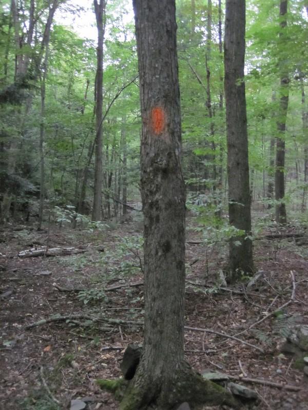 Orange blazes mark a trail along Hagadone Brook as we descend toward the West Kill river.