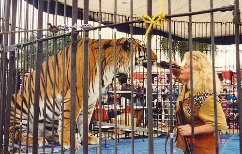 Sarasota - Animal Trainer in Circus | by roger4336
