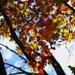 Look Through Fall