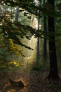 Forest Morning, Gorinsee, Brandenburg, Germany | by Xindaan