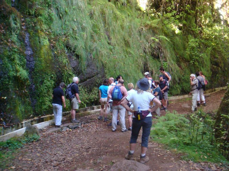 Laurisilva Landscapes Madeira Laurel Forest Also