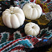 white pumpkins on ikat blanket