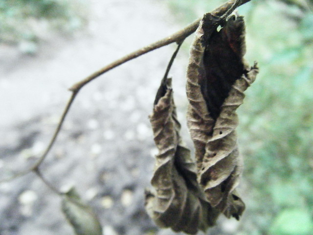 Natural Form, Leaf Curl, Photography 2011 | Explore ...