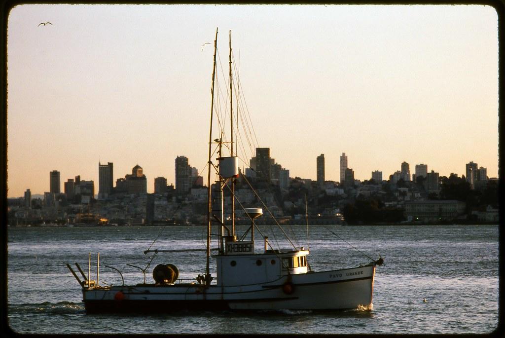 San francisco664 sf bay herring fishing 2 frank keillor for Sf bay fishing report
