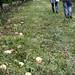 269.we went apple picking