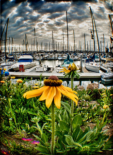 Flowers and Masts | by ...-Wink-...