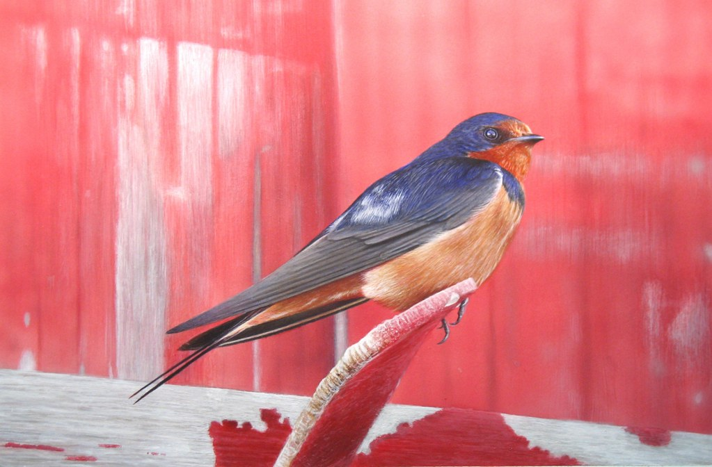 Painting Of A Barn Swallow Perched On A Old Red Barn