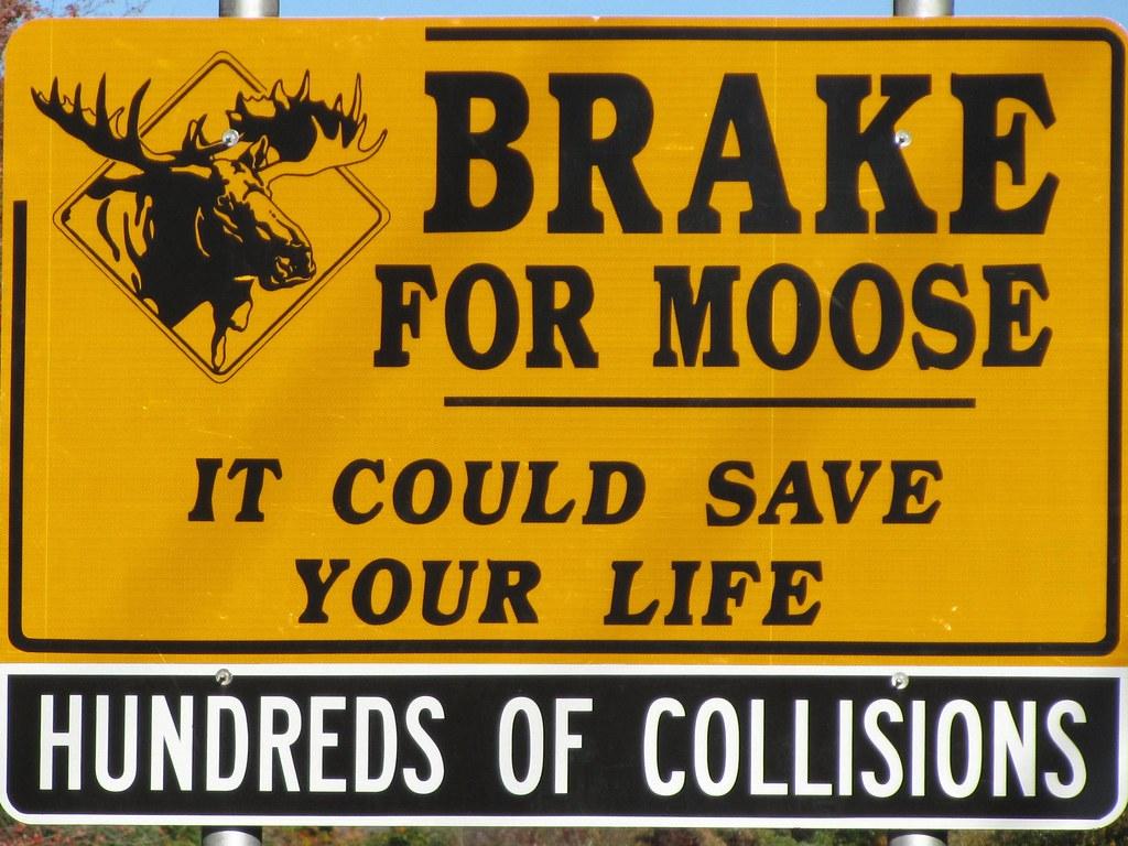 u0026quot brake for moose u0026quot  road sign