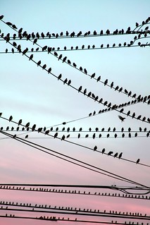 Birds On The Wire | by Faith Alexandra