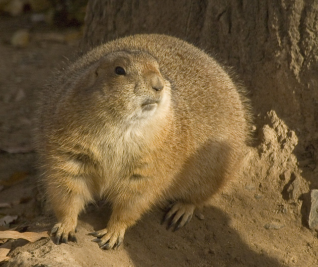 Prairie Dog Homes Pictures