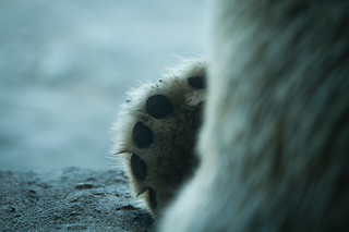 A Polar Bear Paw at the Toronto Zoo | by Christopher Brian's Photography