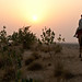 Towards the sunset in the Thar desert, Jaisalmer, Rajasthan, India