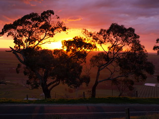 Barossa sunset | by ellabellared