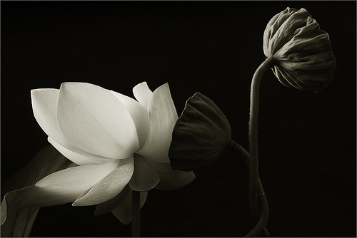 Black & White | by Bahman Farzad