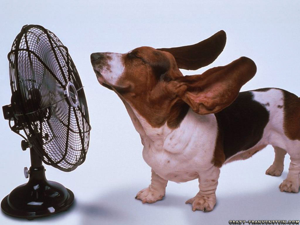 Image result for a picture of a dog that is hot